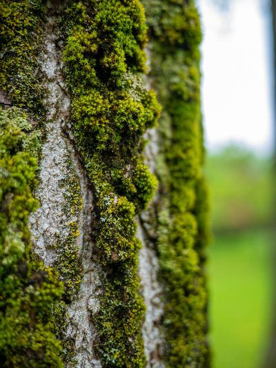 Plant Moss