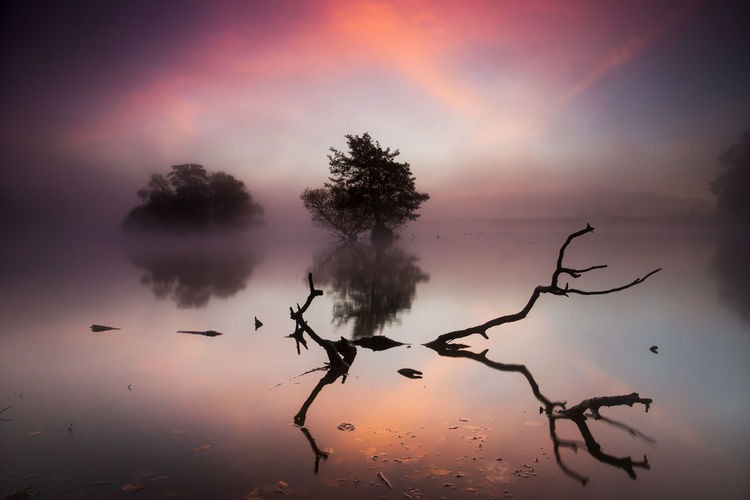 Dawn Over Pen Ponds Autumn Beautiful Nature If Trees Could Speak The Great Outdoors - 2016 EyeEm Awards Cloud Lake London Misty Morning Sky Nature Pond Reflection Richmond Park, London Scenics Showcase: March Fresh On Eyeem  Sky Sunrise Tranquil Scene Tranquility Tree Trees Water Landscapes With WhiteWall Showcase April The Week On EyeEm