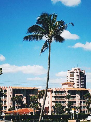 Pretty Palmtree Boca Beach Beachphotography