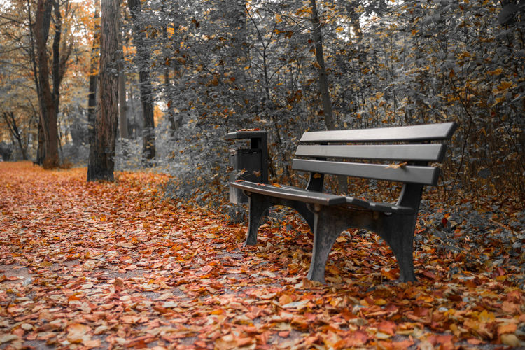 Autumn Autumn Bench Bin Forrest Garbage Can Leaf Leaves No People Nymphenburg Orange Outdoors Tree