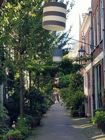 Green City Haarlem The Way Forward City Footpath Outdoors City Life Old Buildings. Walkway Street Light City Art Lamps Korte Houtstraat