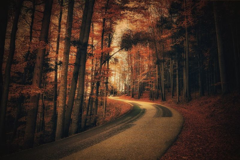 Tree Nature Forest Road Tree Trunk No People Outdoors Scenics Beauty In Nature Austria Vienna Alps Capture The Moment Daily Inspiration A Photo Like A Painting Tranquil Scene Street Autumn Landscape Wood Melancholic Landscapes