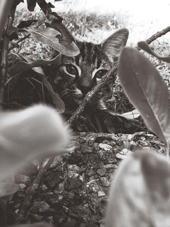 Kitten adventures Playing With The Animals Kitten Cat
