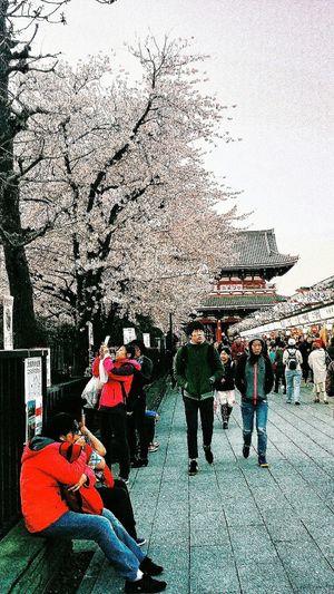 Asakusa Spring 2015 Sakura 桜 花 Streetphotography Japan Tokyo Travel Photography