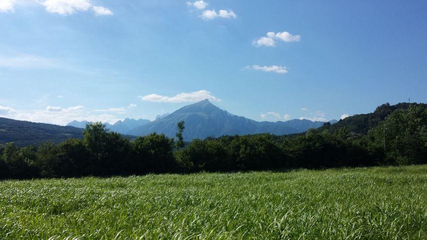 Tree Mountain Tea Crop Rural Scene Agriculture Blue Sky Grass Landscape Mountain Range