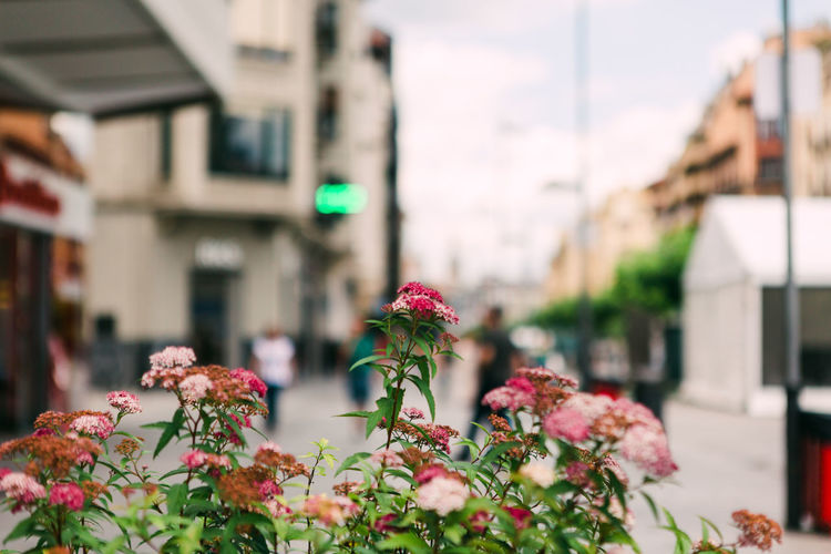 Close-up of flowering plants against buildings in city