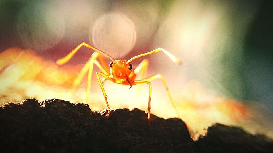 Macro Macro Photography Insect Ant Close-up Outdoors Day Beauty In Nature