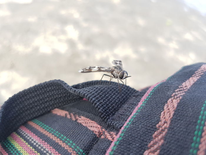 Close-up of fly on textile