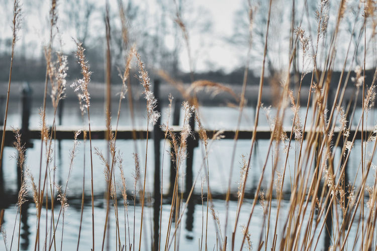 view Schlei Abgelegen Hidden Light Bridge Schleswig-Holstein Kappeln Harbor River Lake Sea View Idyllic Springtime Water Backgrounds Full Frame Frosted Glass Pattern Curtain Window Close-up Plant Life Growing Wilted Plant Lakeside Lakeshore Stalk Dried Dried Plant 17.62° Stay Out Springtime Decadence