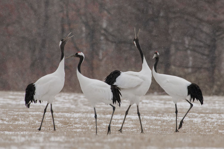 White birds perching on land during winter