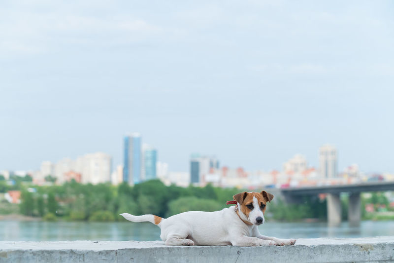 Dog in a city