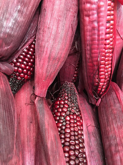 Heap of Corns. Bush Case Casing Chunk Clot Cob Corn Corncob Ear Fiber Food Jacket Kernel Loaf Lump Maize Plant Red Scabbard Sheath Slipcover Tassel Vegetables Vegetarian Violet