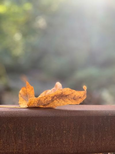 Fallin for fall