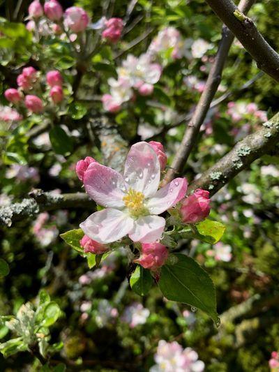 Flower in a