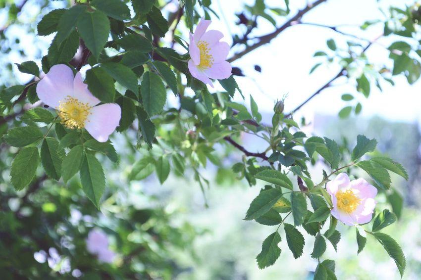 🌷 Flowers 🌹 Cute♡ *.*