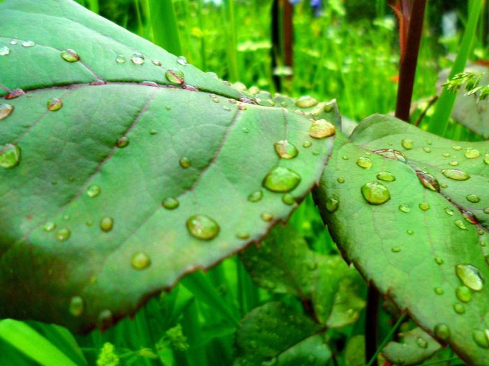 Green Color Leaf Nature Plant Water Freshness Beauty In Nature