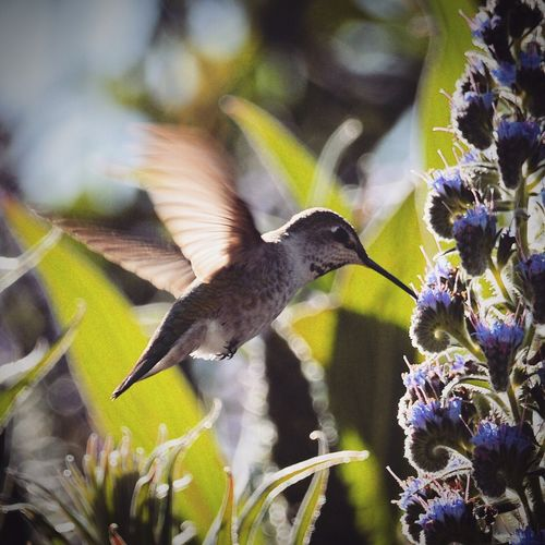Hummingbird One Animal Animal Themes Bird Animals In The Wild Wildlife Flower Zoology Flying Perching Close-up Beauty In Nature Full Length Nature Avian Freshness Animal Behavior Focus On Foreground Bumblebee Butterfly Beak