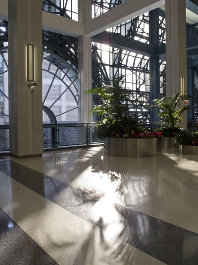 Modern Workplace Culture Architecture Built Structure Day Greenhouse Indoors  Nature No People Plant Shadow Sunlight