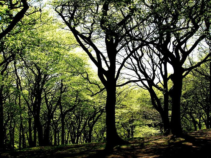 Tree Nature Growth Green Color No People Tranquility Beauty In Nature Branch Day Outdoors Adventure Tandlehill Park Landscape Lieblingsteil