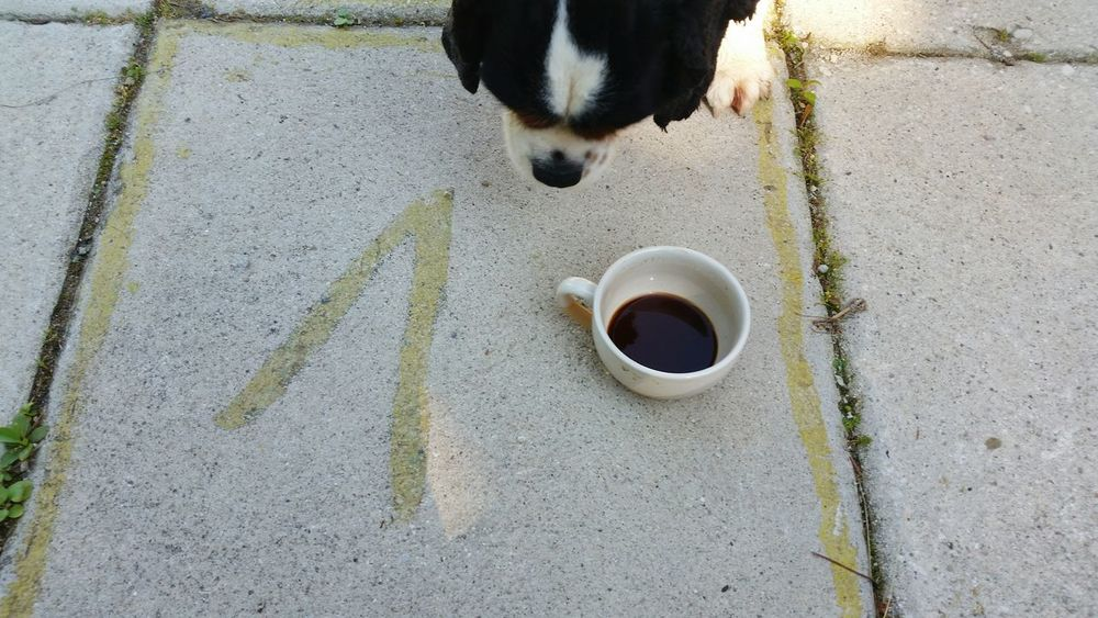 Sniffing Out A 10 10 Pets Drink Dog Coffee - Drink High Angle View Coffee Cup Food And Drink Close-up