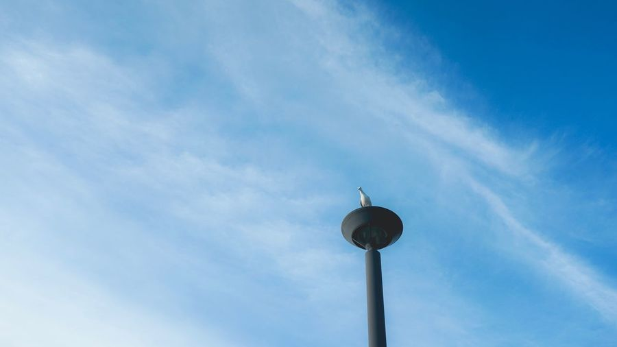 The Sky Is All Yours Sky Low Angle View No People Outdoors Built Structure Architecture Cloud - Sky City Nature bird