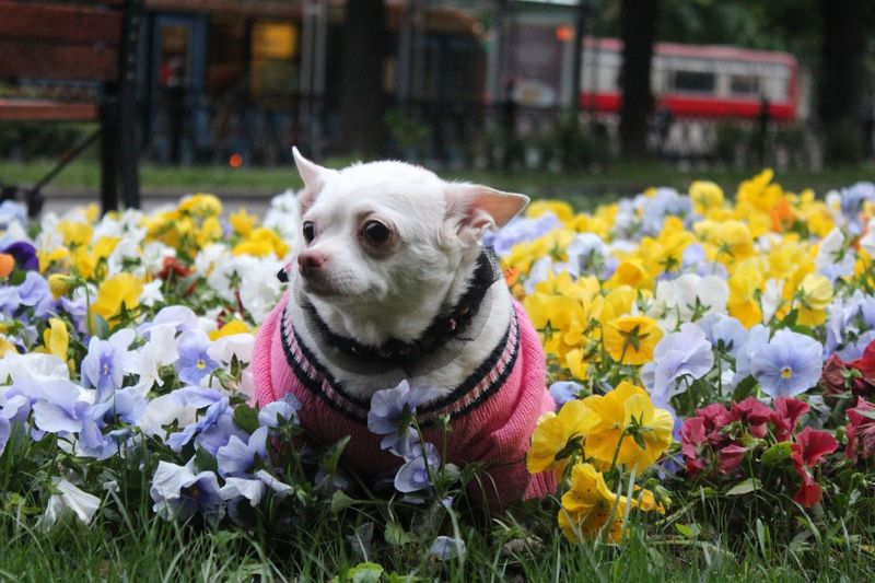 Close-up of a dog with flowers