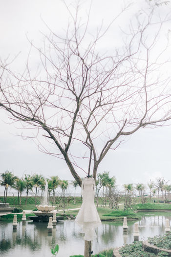 Bare tree in a park