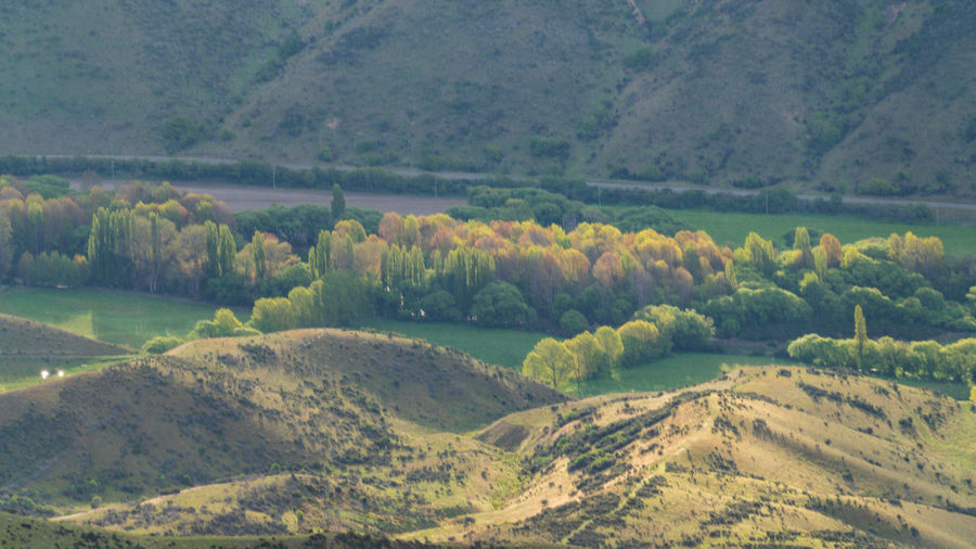 Spring at criffel range otago nz Green Color Nature Tree Landscape Outdoors Beauty In Nature No People Scenics Travel Springtime Loneliness Hiking l