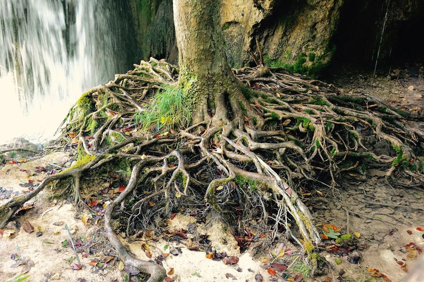 Croatia ♡ Forest Green Color Life Over Years Nature Plitvice National Park Roots Of Life Strong Roots Strong Fu