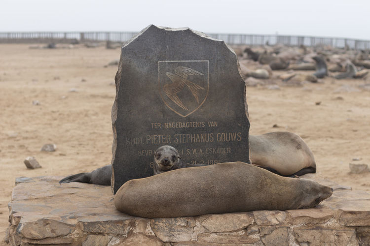 Cape Cross Seal Reserve Namibia Seal Reserve Animal Themes Animals In The Wild Aquatic Mammal Beach Cape Cross Capecross Close-up Day Mammal Nature No People One Animal Outdoors Relaxation Sand Sea Sea Life Sea Lion Seal Sky Water