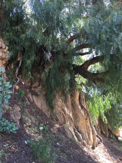 Echo Park  Sunset Blvd Trees Rocks Nature