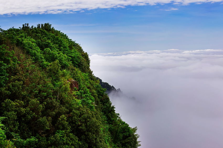 aerial view of rain forest Cloud Tree Aerial View Beauty In Nature Cloud - Sky Day Fern Fog Green Color Growth Mist Nature No People Outdoors Rain Forest Scenics Sky Tranquil Scene Tranquility Tree