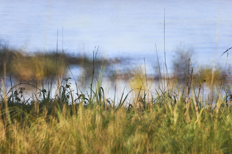 Grass on field by lake against sky