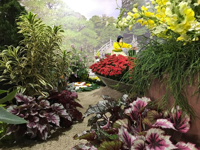 Flower Nature Plant Beauty In Nature Day No People Greenhouse Florist