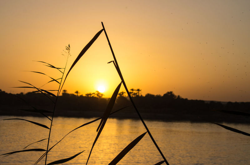 Sunset on Nile river Sunset Water Orange Color Nature Sky Silhouette Scenics No People Beauty In Nature Sun EyeEm Travel EyeEmNewHere TheWeekOnEyeEM NileRiver EyeEm Selects EyeEm Nature Lover The Week On EyeEm Been There. Lost In The Landscape Aswan
