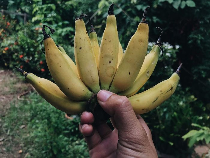 Cropped hand holding bananas against plants