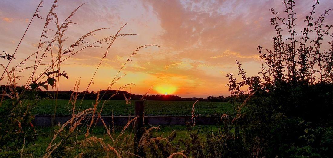 sunset. Tree