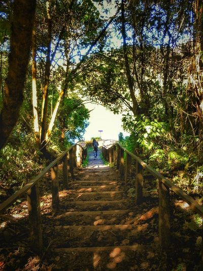 Stairs Stairs & Shadows Stairs In Nature Stairs Down Stairs To New Place Sunny Day Shadows & Lights Shadows And Sunlight Discovering Places Trees #leaves #sunlight #warm Color Trees And Bushes Backpacking Backpack Leaves🌿 Sunset Silhouette Green Nature Nature Harmony Junglewalk