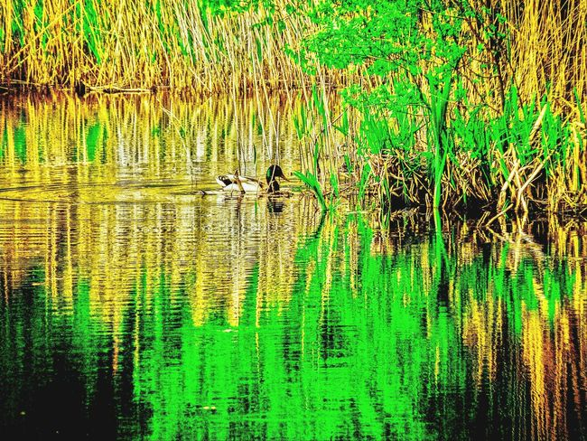Nature On Your Doorstep Nature Somerset Levels Uk In All Its Glory Reflections In The Water Old Peat Workings Now A Nature Reserve Heavy Edits