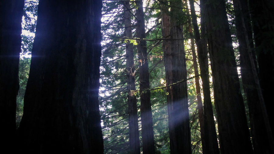 Beauty In Nature Day Forest Growth Landscape Light And Shadow Low Angle View Nature No People Outdoors Santa Claus Scenics Sky Streams Of Light Tranquil Scene Tranquility Tree Tree Trunk Wilderness Area WoodLand