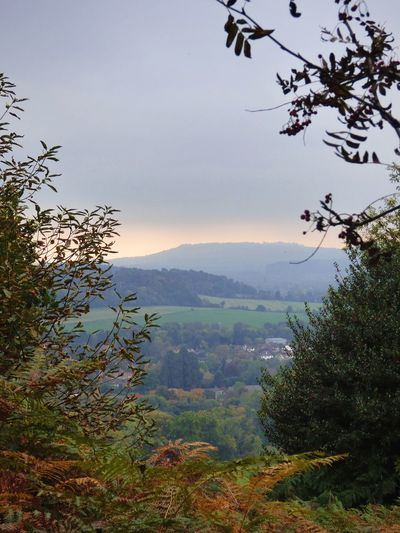 Looking On Newlands Corner Hills Tree Nature Landscape Beauty In Nature Scenics Growth No People EyeEmNewHere Go Higher