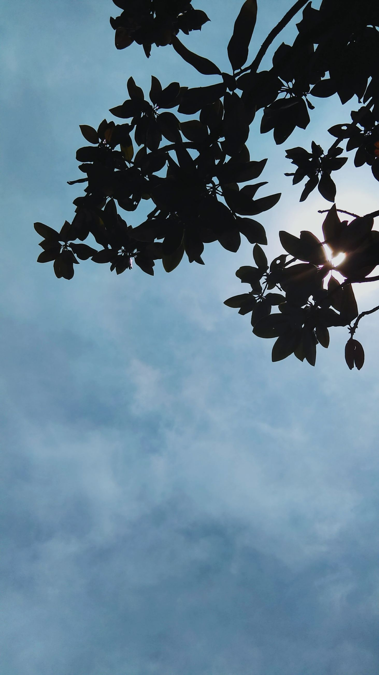 low angle view, sky, cloud - sky, branch, cloudy, tree, nature, cloud, leaf, growth, day, no people, outdoors, beauty in nature, close-up, hanging, silhouette, tranquility, dusk, focus on foreground