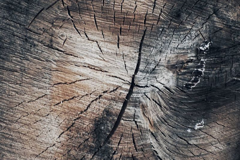 🌲🌲 Into the woods 🌲🌲 Into The Woods Forest Photography Textured  Backgrounds Full Frame Wood - Material Tree Pattern Cracked Rough Tree Stump Wood Close-up Bark No People Natural Pattern Day Tree Ring Weathered Timber Nature Outdoors