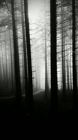 Eerie Blackandwhite Black & White Woods Gothic Forrest Spooky Nature_collection Darkness And Light Blackberry10