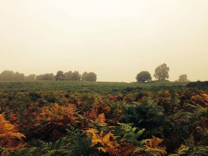 Autumn Landscape Simplicity