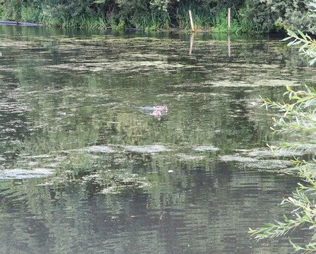 Waterfowl on