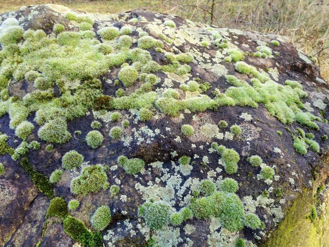 Beauty In Nature Close-up Day Full Frame Green Color Growth High Angle View Land Lichen Moss Nature No People Outdoors Plant Rock Rock - Object Solid Textured  Tranquility Tree Vegetable
