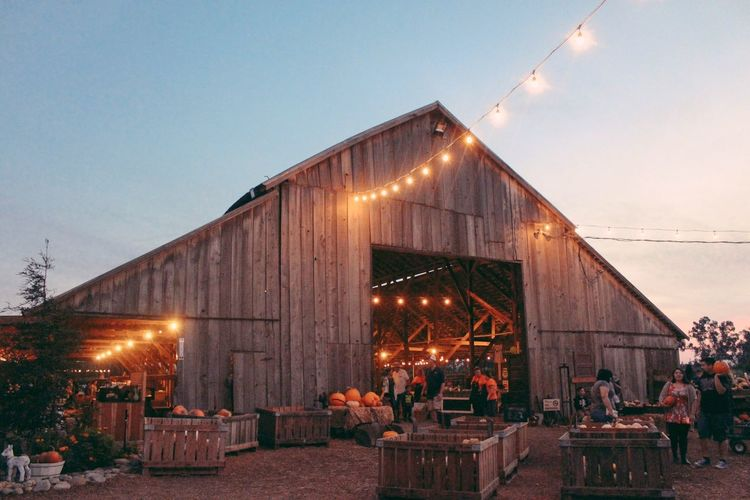 Pumpkin Patch Illuminated Built Structure Architecture Building Exterior Sky Clear Sky Real People Modern Outdoors Day