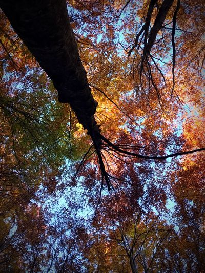 Perspectives On Nature Tree Nature Autumn Beauty In Nature Forest Tranquility No People Tree Trunk Sky Outdoors Autunno  Natura Albero Trekking