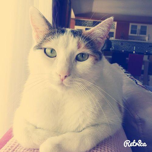 Paşanın keyfi yerinde :D Cat Cool Retrica